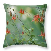 Crimson Columbines Aquilegia Formosa Throw Pillow