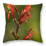 Crimson On Emerald Throw Pillow