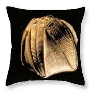 Crinoid Fossil Throw Pillow