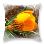 Crocus Gold Two Throw Pillow