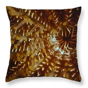 Crown Of Thorns Starfish Throw Pillow