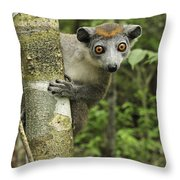 Crowned Lemur Eulemur Coronatus Female Throw Pillow