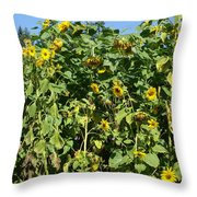 Crows In The Sunflowers Throw Pillow