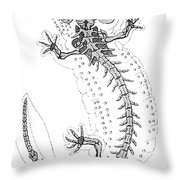 Cryptobranchus, Living Fossil Throw Pillow