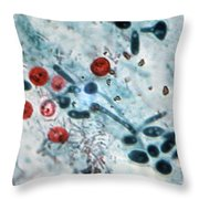 Cryptosporidium Oocysts Lm Throw Pillow by Science Source