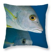 Cubera Snappers Throw Pillow