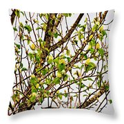 Cucumber Tree Blossoms Throw Pillow