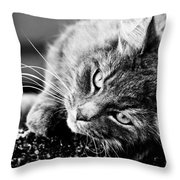 Cuddly Cat Throw Pillow