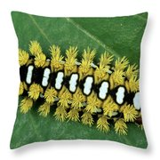 Cup Moth Limacodidae Caterpillar On Leaf Throw Pillow