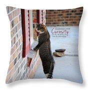 Curiosity Inspirational Cat Photograph Throw Pillow