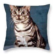 Curious American Shorthair Throw Pillow