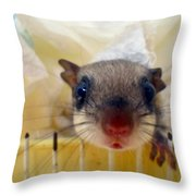 Curious Flyer Throw Pillow