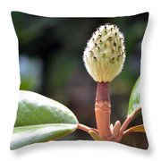 Curly Browns Throw Pillow