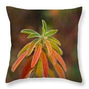 Cushion Spurge Throw Pillow