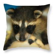 Cute Face Behind The Mask Baby Raccoon Throw Pillow