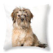 Cute Miniature Terrier Throw Pillow
