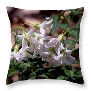 Cutleaf Toothwort Dspf048 Throw Pillow