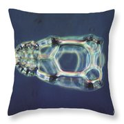 Cycladophora Goetheana Lm Throw Pillow by Eric V. Grave