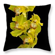 Cymbidium - Boat Orchid Throw Pillow