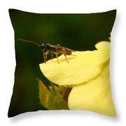Cynipoidea Throw Pillow