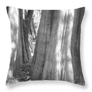 Cypress Path Throw Pillow