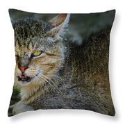 Da Cat Throw Pillow