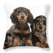 Dachshund And Merle Dachshund Pups Throw Pillow