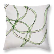 Dacron Fibers Throw Pillow