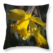 Daffodil Squared Throw Pillow