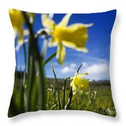 Daffodils In Cezallier. Auvergne. France. Europe Throw Pillow