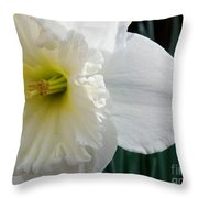 Daffy-down-dilly Throw Pillow