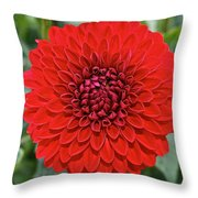 Dahlia 4001 Throw Pillow