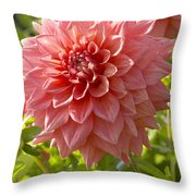 Dahlia Dahlia Sp Beverly Fly Variety Throw Pillow