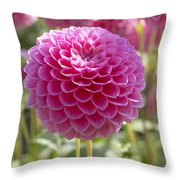 Dahlia Dahlia Sp Lindas Baby Variety Throw Pillow