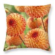 Dahlia Dahlia Sp Mirella Variety Flowers Throw Pillow