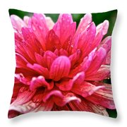 Dahlia Dew Drops Throw Pillow