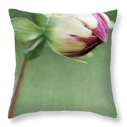 Dahlia Flower 2 Throw Pillow
