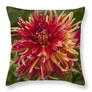 Dahlia In Its Prime Throw Pillow