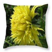 Dahlia Named Colwood Ann Throw Pillow