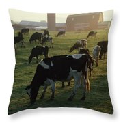Dairy Cattle Grazing Throw Pillow
