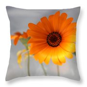 Daisies 4 Throw Pillow