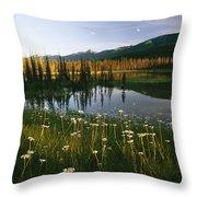 Daisies Grow Near A Lake In Yoho Throw Pillow
