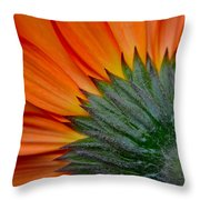 Daisy Delight Throw Pillow