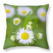 Daisy Flowers Throw Pillow