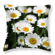 Daisy In A Field Throw Pillow