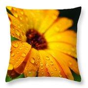 Daisy In The Rain Throw Pillow