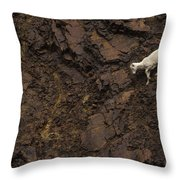 Dall Sheep Were Is Very Adapt Throw Pillow