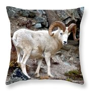 Dall's Sheep Throw Pillow