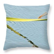 Damselfly Reflection Throw Pillow
