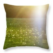 Dandelion And Meadows In Back-light Throw Pillow